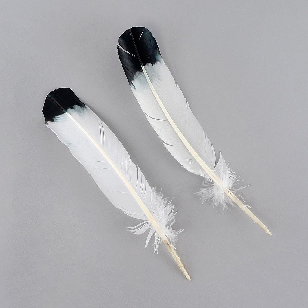 Imitation Eagle Quill Feathers 2//Pkg-White W//Black Tip B702